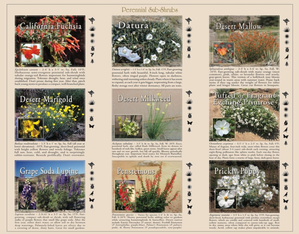 guide to native plant landscaping perennials