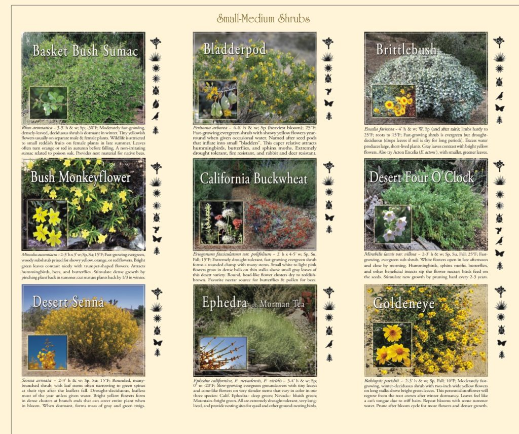 guide to native plant landscaping shrubs
