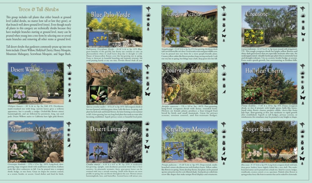 guide to native plant landscaping trees