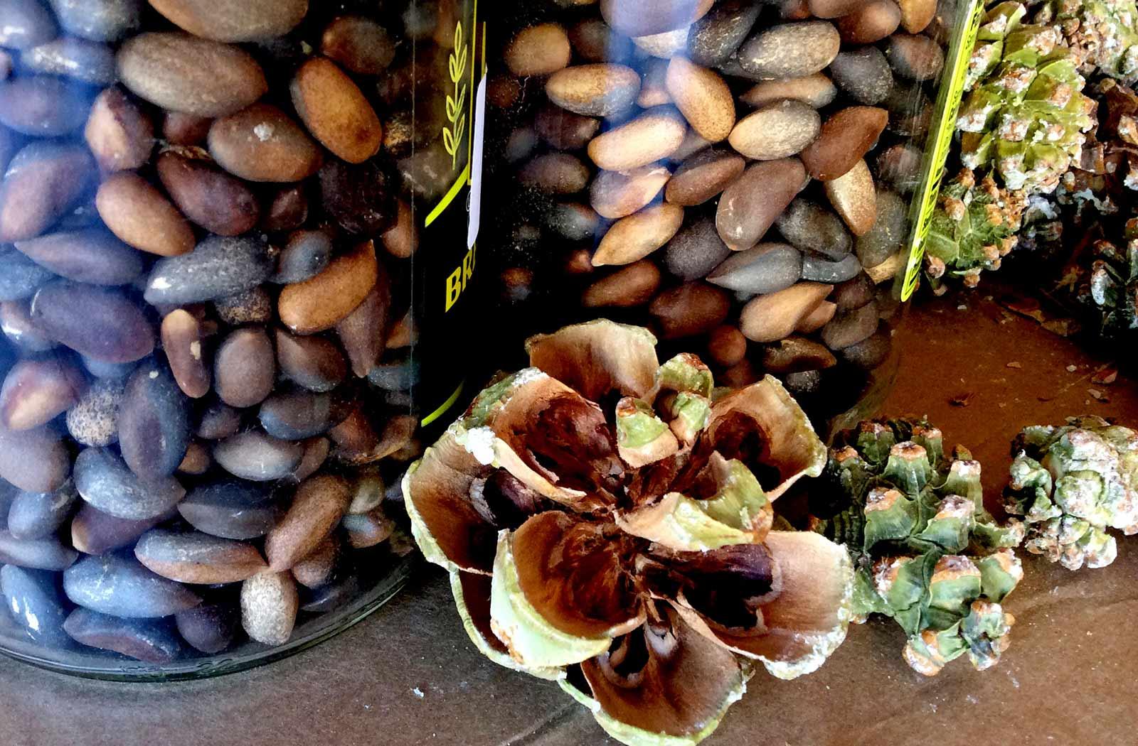 mojave desert seed bank